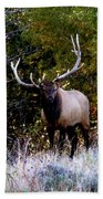 Majestic Bull Elk Survivor In Colorado  Beach Towel