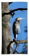 Majestic Great Blue Heron 1 Beach Towel