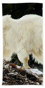 Majestic Mountain Goat Beach Towel