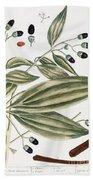 Malabar Cinnamon, 1735 Beach Towel