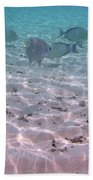 Maldives School Of Tropical Fish Beach Towel