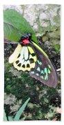 Male Birdwing Butterfly Beach Towel