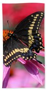 Male Black Swallowtail Butterfly On Echinacea Plant Beach Towel