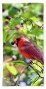 Male Cardinal And His Berry Beach Towel by Kerri Farley