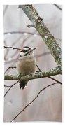 Male Downey Woodpecker Beach Towel