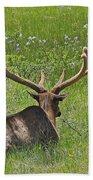 D10270-male Elk  Beach Towel
