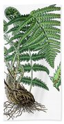 male fern, Dryopteris filix-mas Beach Towel