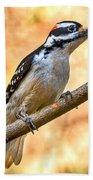 Male Hairy Woodpecker Beach Towel