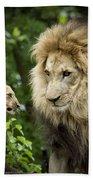 Male Lion And Cub Beach Towel