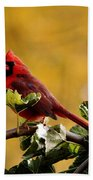 Male Northern Red Cardinal Beach Towel