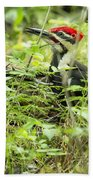Male Pileated Woodpecker On The Ground No. 2 Beach Towel