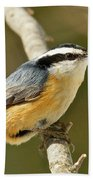 Male Red Breasted Nuthatch 2151 Beach Towel