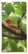 Male Summer Tanager Beach Towel