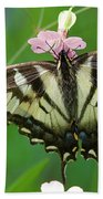 Male Tiger Swallowtail 5416 Beach Towel
