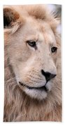 Male White Lion ... Thabo Beach Towel
