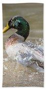 Mallard Duck Bathing Time In Dam Beach Towel