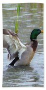 Mallard Duck Landing In Pond Beach Towel