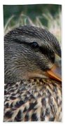 Mallard Female 2 Beach Towel