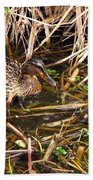 Mallard Mama With Duckling Beach Towel