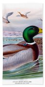 Mallard Or Wild Duck Antique Bird Print Joseph Wolf Birds Of Great Britain  Beach Towel