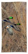 Mallard's In Flight Beach Towel