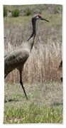 Mama And Two Juvenile Sandhill Cranes Beach Towel