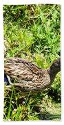 Mama Duck On Guard Beach Towel