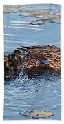Mama Mallard And Her Ducklings Beach Towel