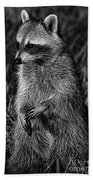 Mama Raccoon Beach Towel