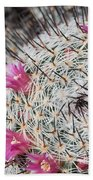 Mammillaria Cactus With Small Flowers Beach Towel