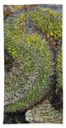 Mammillaria Red Cap Cristata Beach Towel