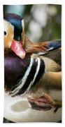 Mandarin Duck Raising One Foot. Beach Towel