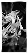 Mandarin Honeysuckle Vine 1 Black And White Beach Towel
