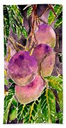 Mango Tree Fruit Beach Towel