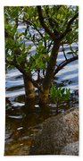 Mangroves And Coquina Beach Towel