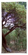 Manzanita Tree By The Road Beach Towel