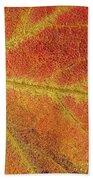 Maple Leaf On Water Beach Towel