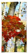 Maple Leaves And Birch Bark Beach Towel
