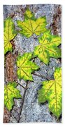 Maple Mania 12 Beach Towel