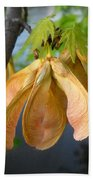 Maple Seeds In May Beach Towel