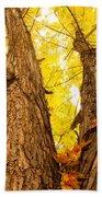 Maple Tree 3 Beach Towel