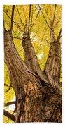 Maple Tree Portrait Beach Towel