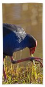 March Of The Swamphen Beach Towel by Mike  Dawson
