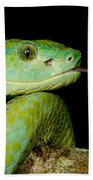 Marchs Palm Pitviper Beach Towel