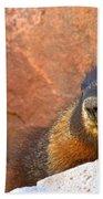 Marmot On The Rocks Beach Towel