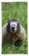 Marmot Pup Beach Towel