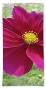 Maroon And Yellow Cosmos Beach Towel