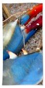 Maryland Blue Claw Beach Towel