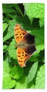 Maryland Eastern Comma Beach Towel