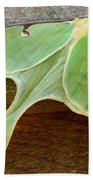 Maryland Luna Moth Beach Towel